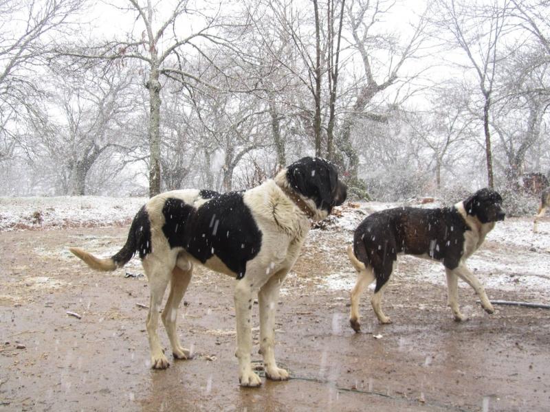 LPD étude mise à jour, élevage chiens de Protection étude mise à jour