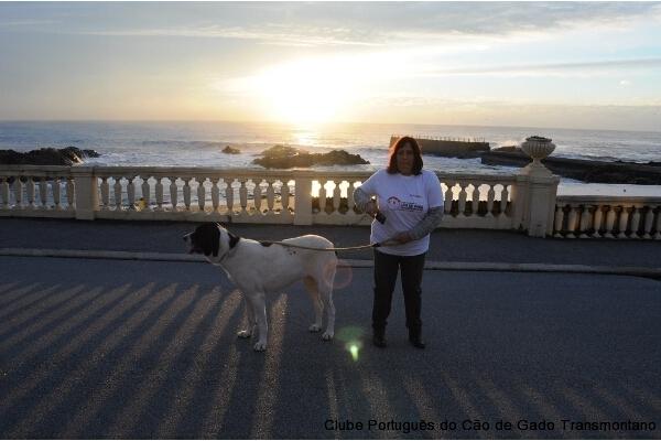 CÃOminhada Porto 2014 CPCGT Clube Português do Cão de Gado Transmontano