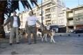 CÃOminhada Porto 2014 CPCGT Clube Português do Cão de Gado Transmontano_600_400