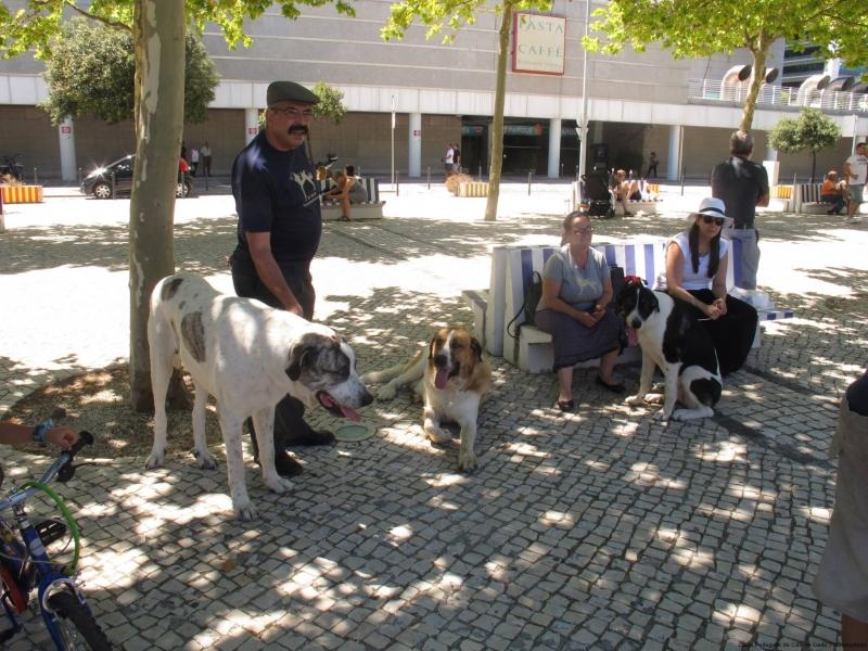 Encontro Cão de Gado Transmontano, Parque das Nações, Lisboa