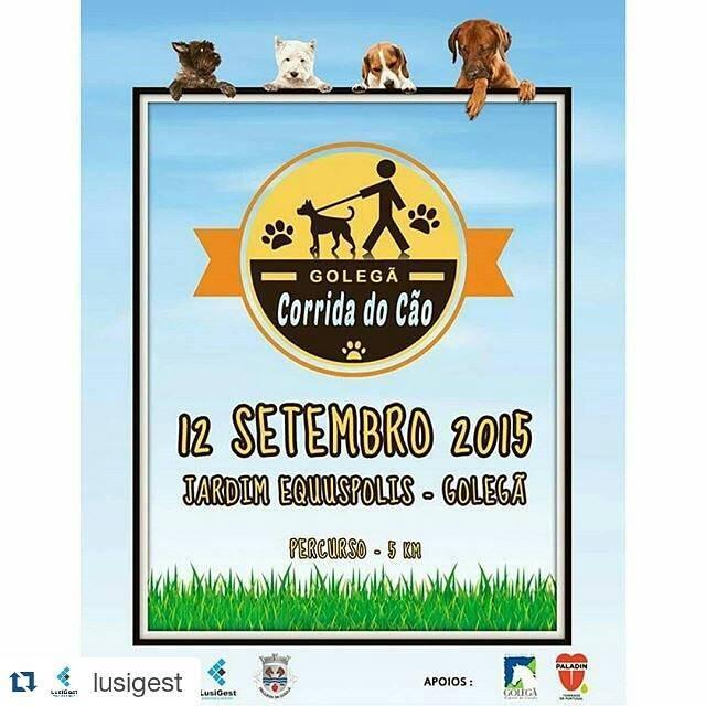 Programma delle attività settembre, cane da corsa a Golegã