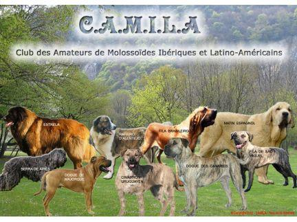 camila_accueil_2012__432_323_filled