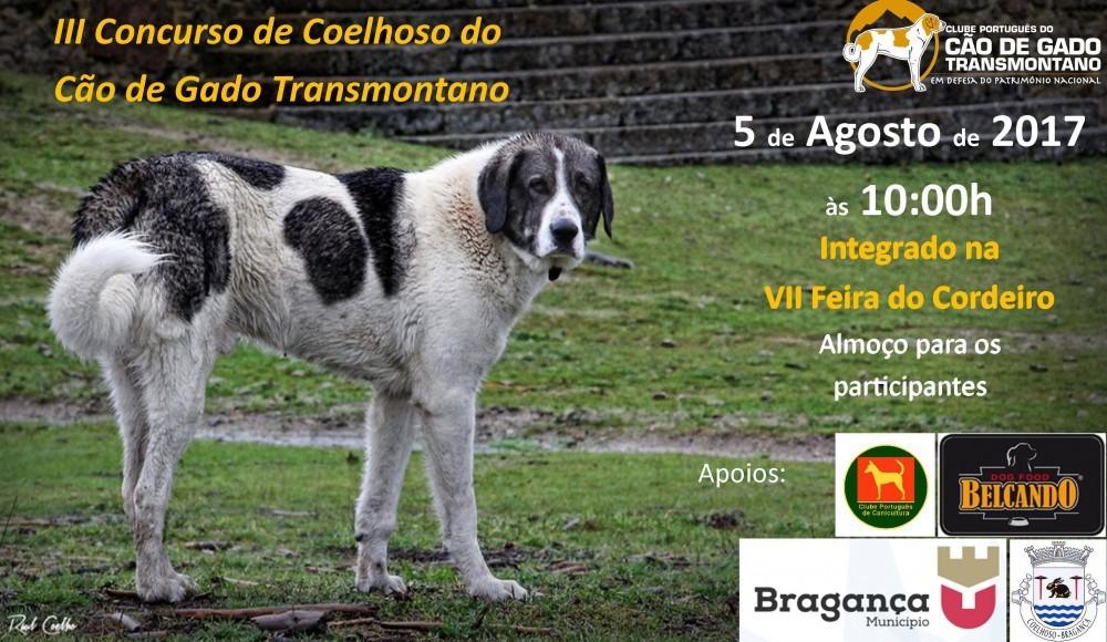 Concurso Cão de Gado Transmontano Coelhoso