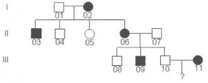 Genética Canina e Hereditariedade